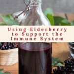 Using Elderberry to Support the Immune System