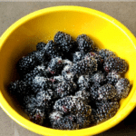 dark blackberries and a golden oat topping in a yellow bowl